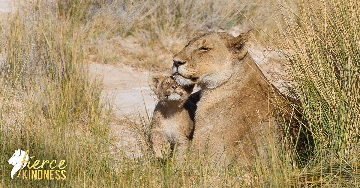 Fierce Kindness shown my lioness and cub