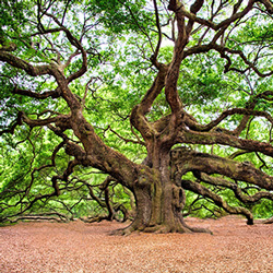 A tree full of character