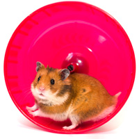 Build Character Get Off Hamster Wheel