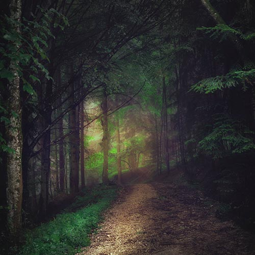 Gorgeous Forest Image for Forest Bathing
