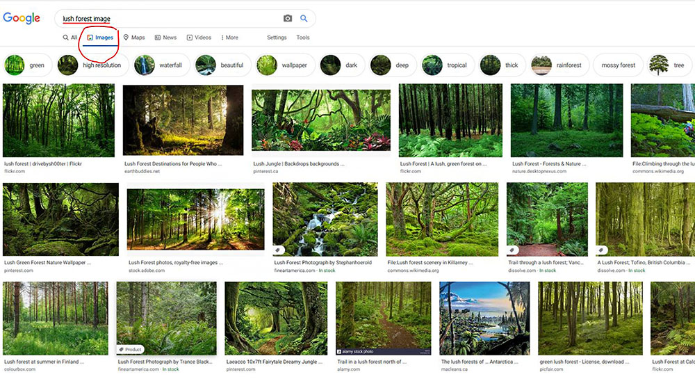 Forest Bathing Image Examples