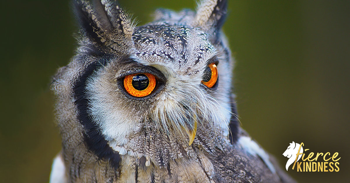 Owl representing Margaret Mead Quotes as the Featured Image