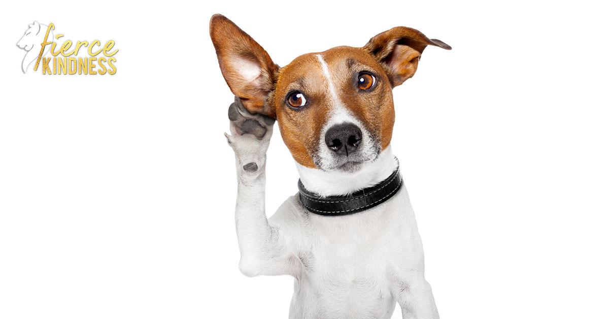 Dog Listening representing survey