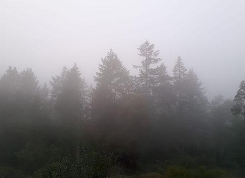 Wildfire Smoke Image