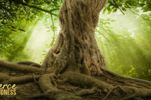 1 Minute Meditation on Tree Roots with Sunshine