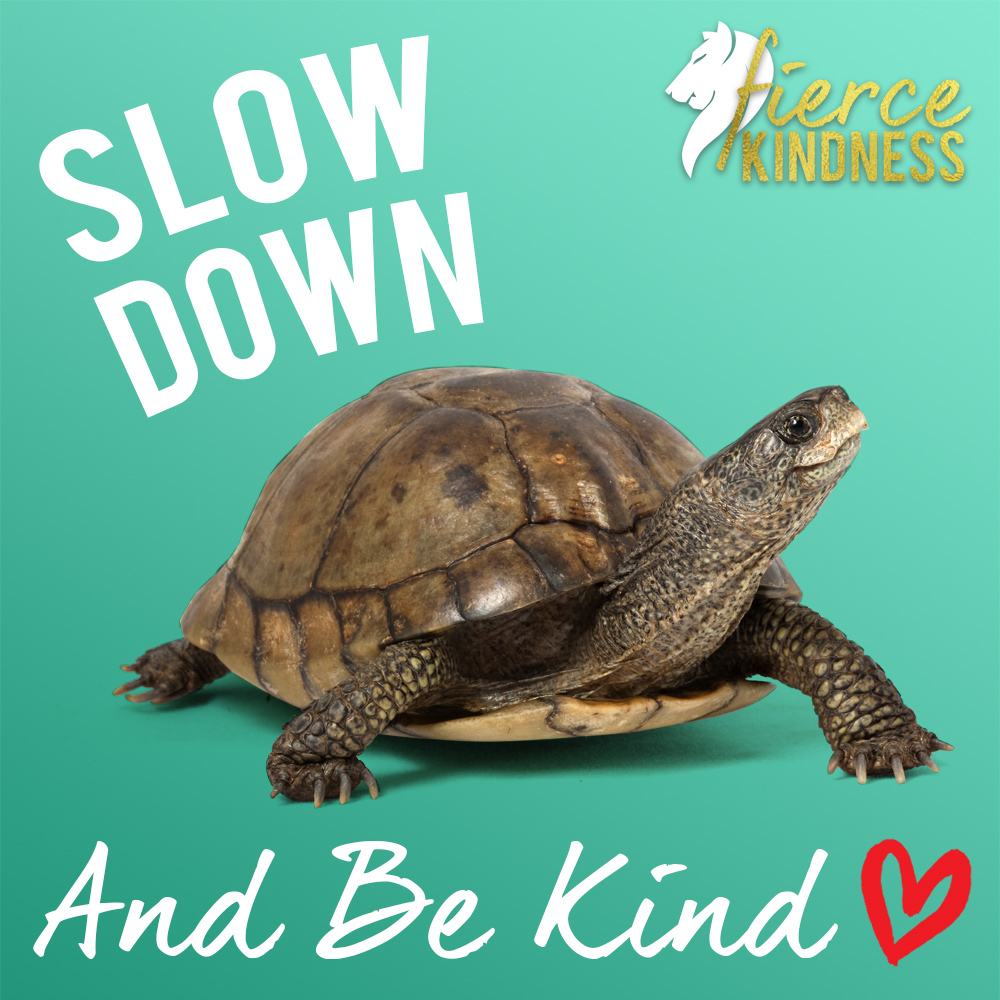 Slow Down & Be Kind!