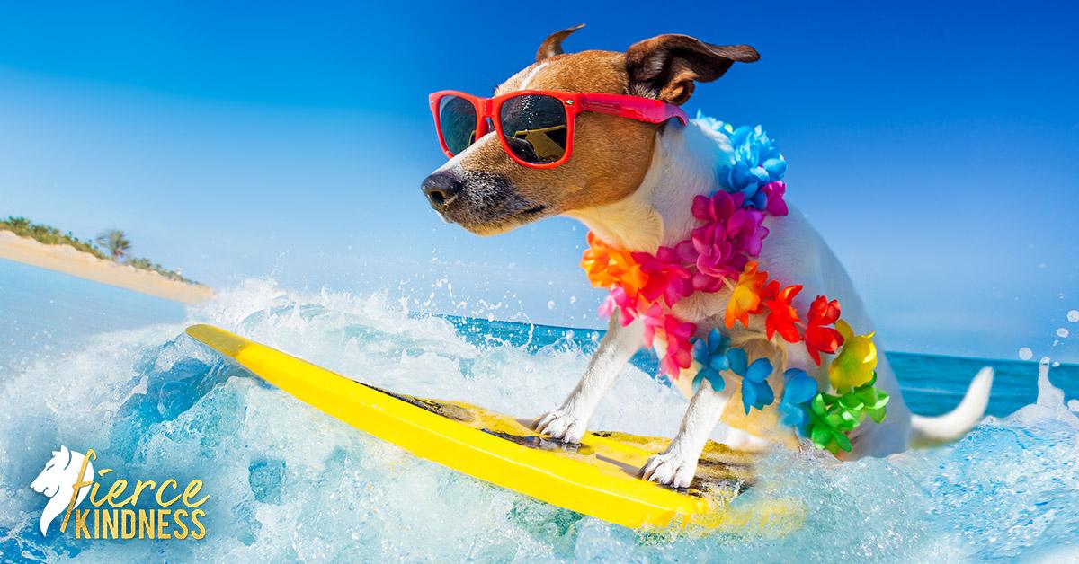 Energised Dog on Surfboard