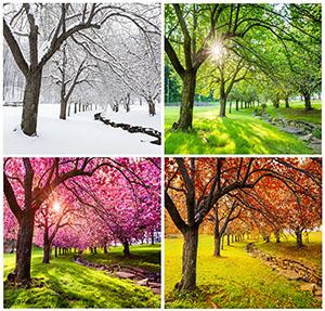 Tree changing over seasons