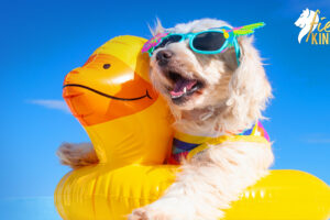 Happy Dog with Duck Ring Having Kindest Summer Ever!